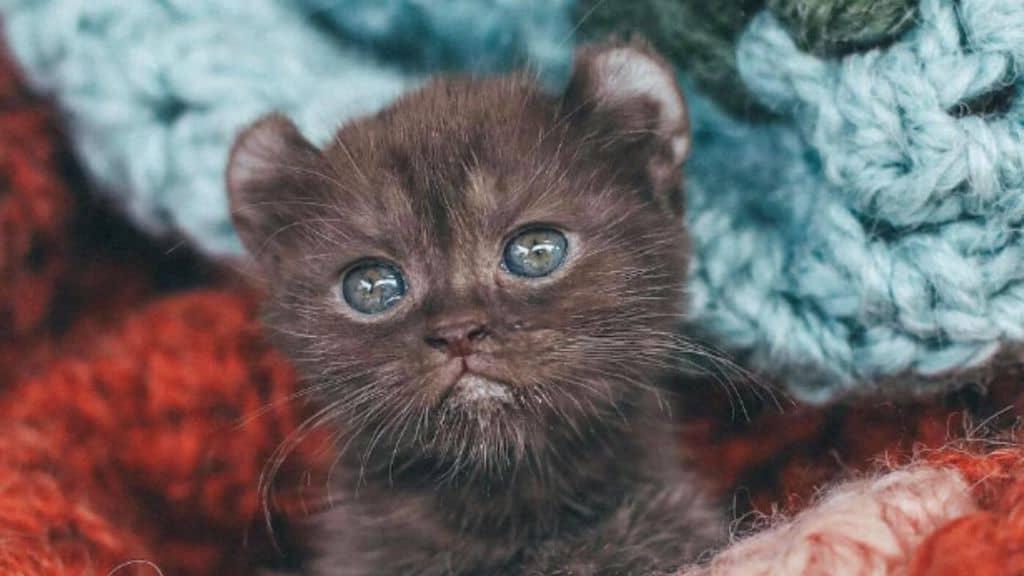 quill gattina malformata star del web