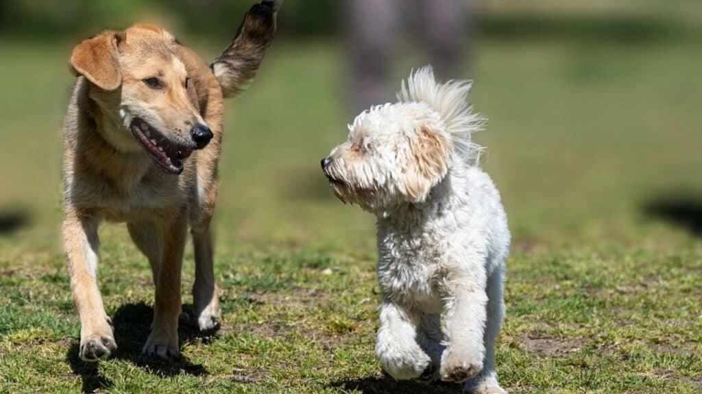 """Cina, storica decisione: """"I cani non sono cibo"""". Ma se ne uc"""