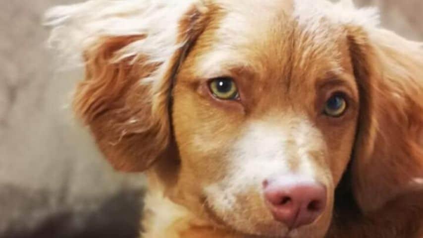 Nicoletta è bloccata in Marocco dal Coronavirus insieme al cagnolino Oscar
