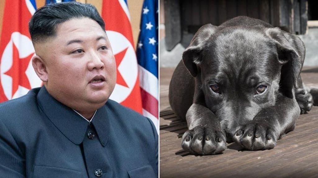 Il leader nordcoreano Kim Jong Un e un cane