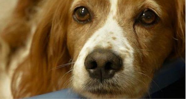 Adozioni Animali - Annunci animali cani, gatti, uccelli ...