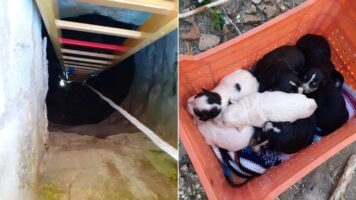 8 cuccioli di cane gettati in un pozzo: salvati dai Vigili del Fuoco