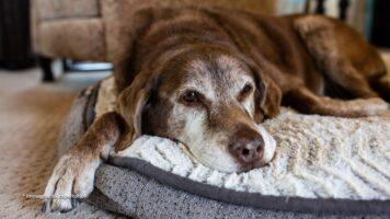 il cane cella 126 è stato adottato e si chiama rollo