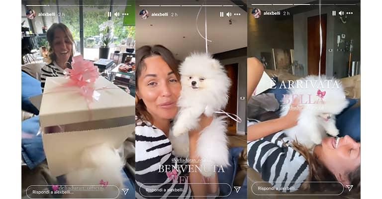 Instagram Stories di Alex Belli e Delia Duran
