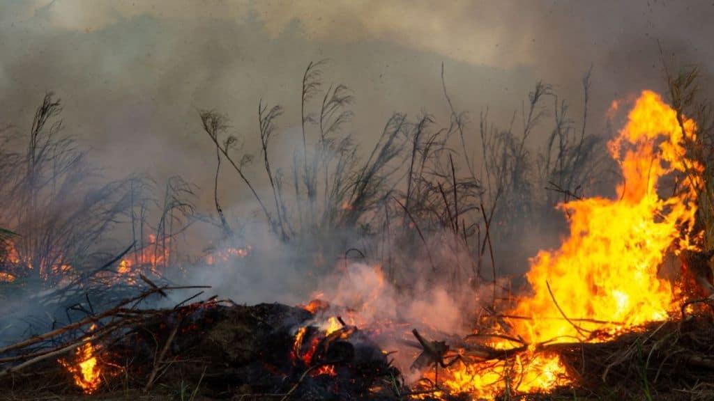 Deforestazione tropicale: nel 2020 persa un'area grande quanto i Paesi Bassi