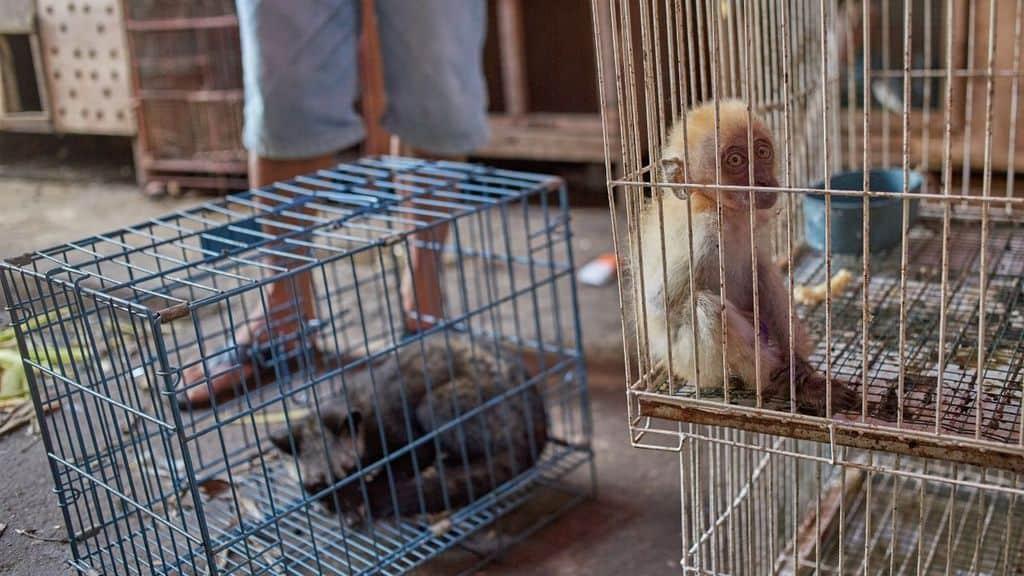 mercati animali vivi sospensione oms