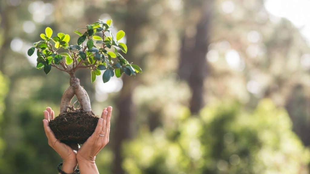 Giornata mondiale dell'ambiente: perché si festeggia il 5 giugno, ecosistemi e nuove sfide da affrontare
