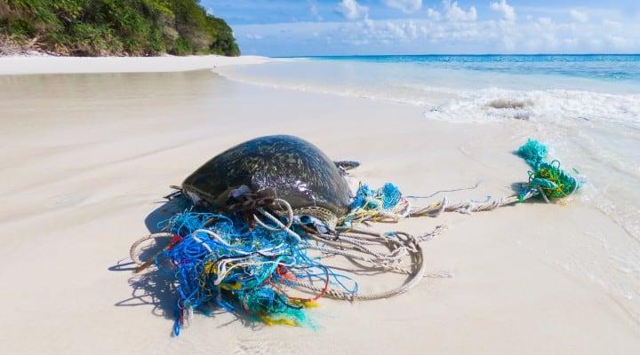 rifiuti plastica pericolo per le tartarughe