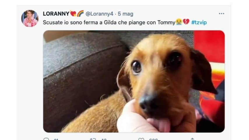 Gilda, il cane di Tommaso Zorzi