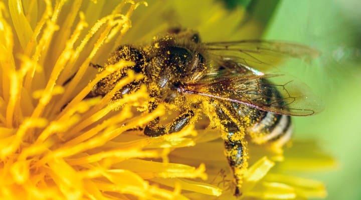 api salvate da prati urbani