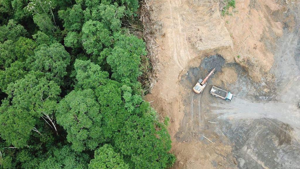 Allarme per la foresta Amazzonica, tra disboscamenti e incendi