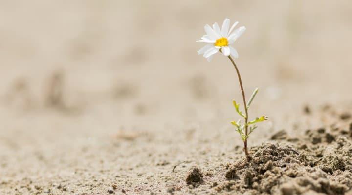 giornata mondiale lotta desertificazione