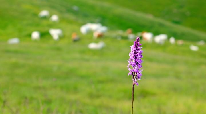 Dalla Regione Piemonte arriva un incentivo per trasferirsi in montagna: tutti i dettagli del bando