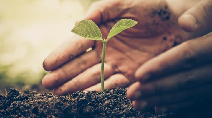 """Aziende """"B Corp"""", certificate per la sostenibilità: di cosa si tratta e quante ce ne sono in Italia"""