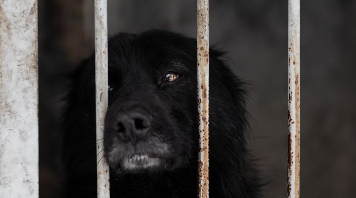 Corea del Sud, per il Presidente Moon Jae-In è il momento di abolire il consumo di carne di cane