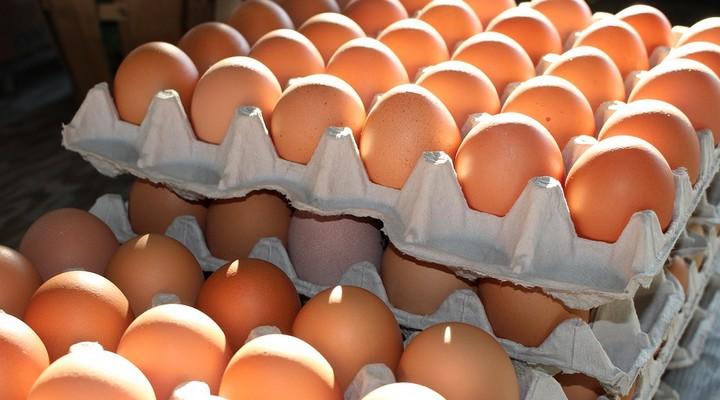 Uova e benessere degli animali: come leggere il codice sul guscio e fare scelte più consapevoli