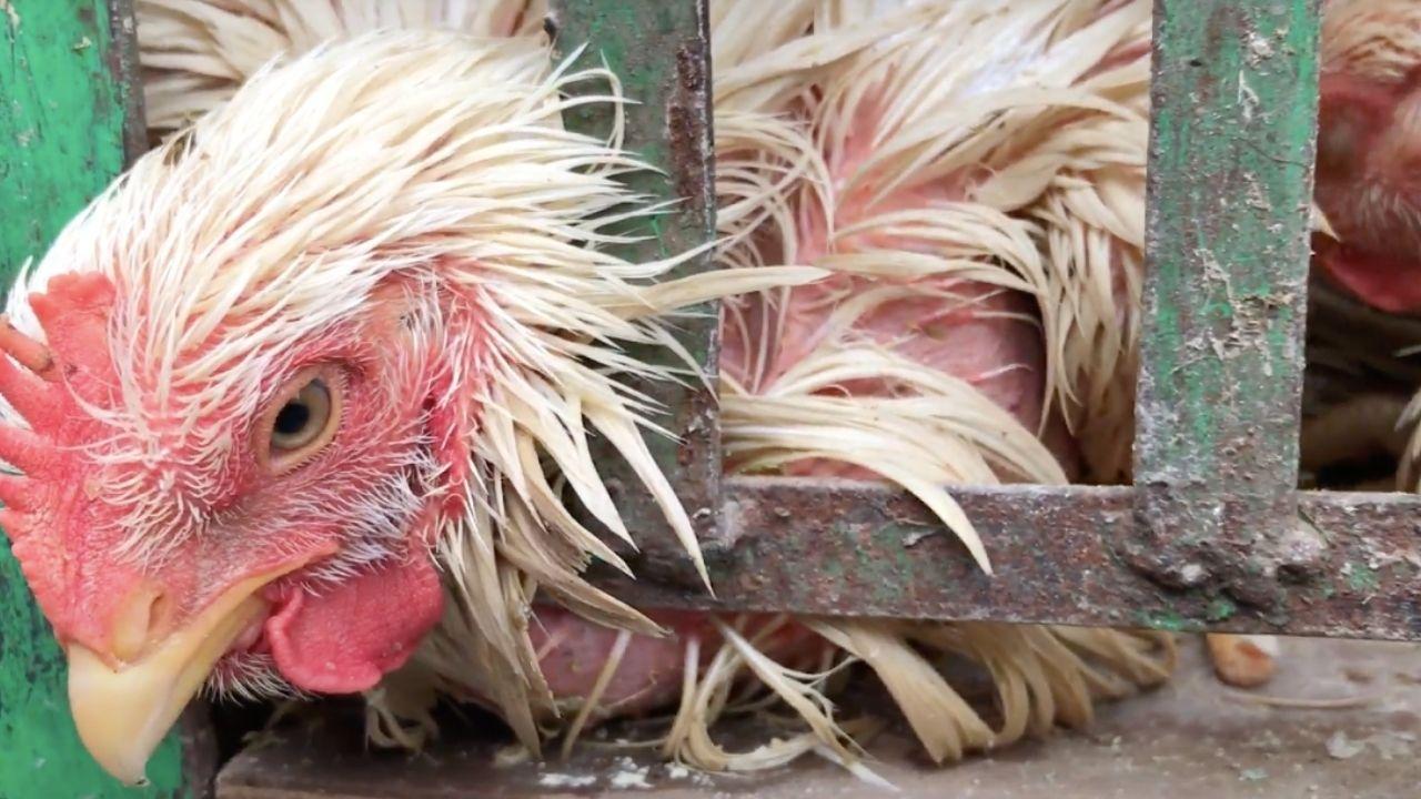 """Wet market, la nuova inchiesta di Animal Equality. La denuncia: """"Intense sofferenze inflitte agli animali"""""""