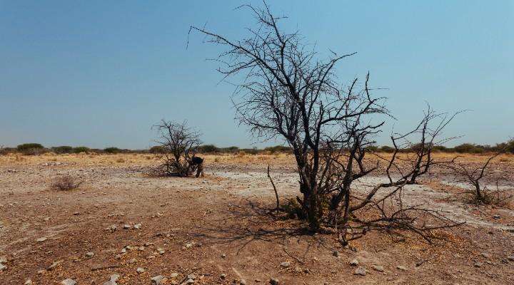 """Riscaldamento globale, l'allarme a pochi giorni dalla Cop26: il mondo rischia ancora la """"catastrofe climatica"""""""