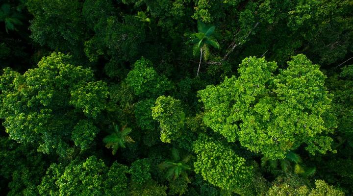 Foresta pluviale del Daintree: è la più antica al mondo e un accordo storico la restituisce agli aborigeni