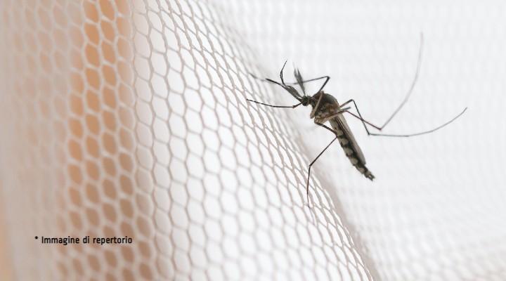 Zanzara coreana, uno studio ne analizza la presenza nel nord Italia: quali sarebbero i rischi della sua diffusione